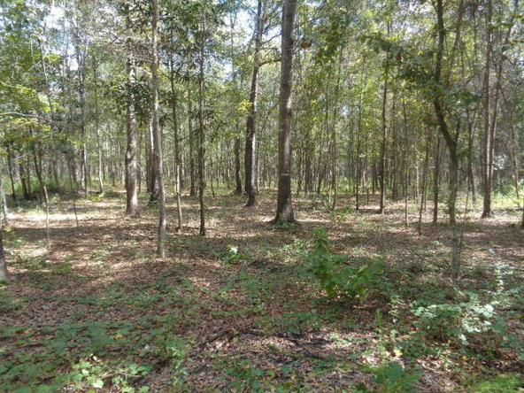 31.2 Ac Johnny Murphy Rd., Dothan, AL 36301 Photo 24