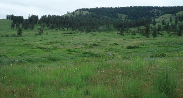 B-U Graves Mt. Rd., Curlew, WA 99118 Photo 11