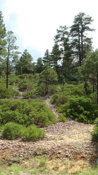 1720 S. Pleasant View Dr., Show Low, AZ 85901 Photo 4