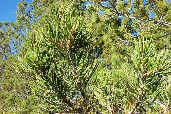 7217 N. Audrey Way, Williams, AZ 86046 Photo 19