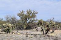 Home for sale: 15600 W. Cattle Trail, Tucson, AZ 85736