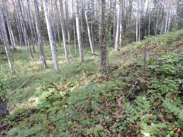 4041 W. Voss Dr., Wasilla, AK 99623 Photo 16