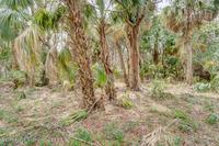 Home for sale: Lot 4 Oak Leaf Ln., Hernando Beach, FL 34607