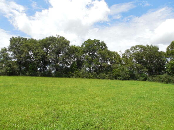 3 Acres Hwy. 103, Slocomb, AL 36375 Photo 11