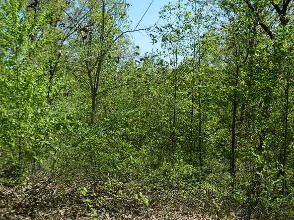 Lot 8 Teel Point, Cleveland, GA 30528 Photo 34