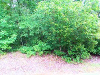 Home for sale: Lot #8 Gee Valley Dr., Timmonsville, SC 29161
