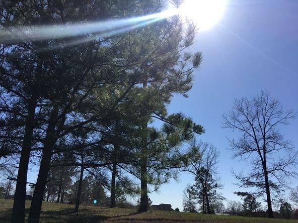 30 Deer Run Cr, Rogersville, AL 35652 Photo 4