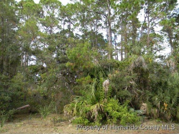 8292 Driftwood Dr., Weeki Wachee, FL 34607 Photo 13