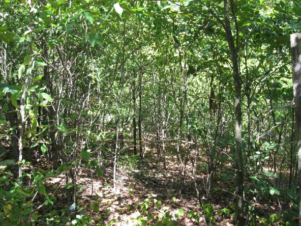 16.38 Acres Layer Ln., Harrisburg, AR 72432 Photo 3