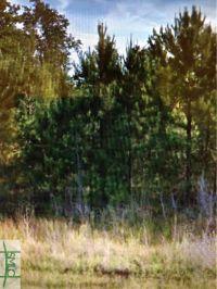Home for sale: 0 Us Hwy. 80, Eden, GA 31303