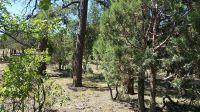 Home for sale: 2589 Pine Crest Dr., Happy Jack, AZ 86024