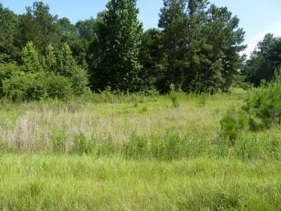 Cedar Ln. Lot#33, Summit, MS 39666 Photo 12