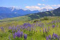 Home for sale: Tbd Eldridge Creek Trail, Livingston, MT 59047