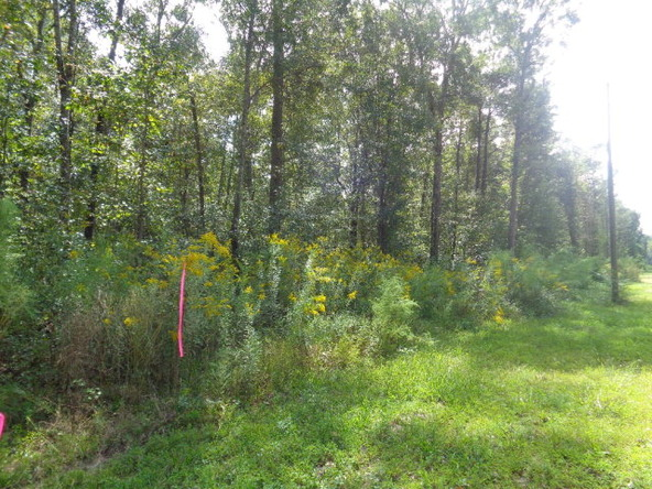 31.2 Ac Johnny Murphy Rd., Dothan, AL 36301 Photo 23