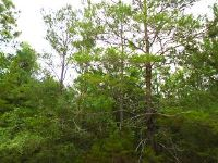 Home for sale: 5 Acres Hinote Rd., DeFuniak Springs, FL 32433