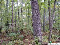 Home for sale: Alabama Hwy. 117, Mentone, AL 35984