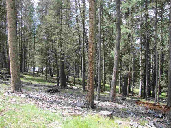 119 W. Pecos Canyon Estates Rd., Tererro, NM 87573 Photo 21