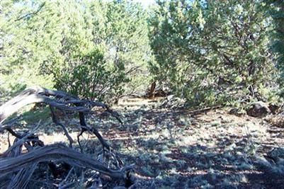 1419 W. Maverick Ln., Williams, AZ 86046 Photo 2