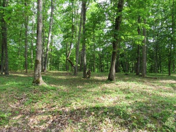 16-Lot The Woods At Wolf Creek, Jabez, KY 42544 Photo 7