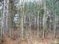 Home for sale: Lot 12 & 13 Warbler Ln., Willard, WI 54493