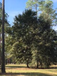 Home for sale: Lot 35 Cannon Branch Rd., Cordele, GA 31015