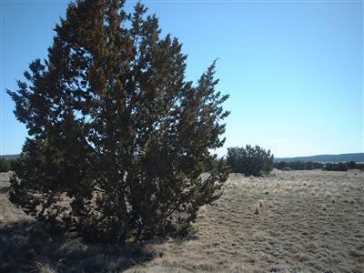 25505 E. Hillcrest Dr., Seligman, AZ 86337 Photo 4