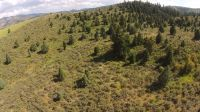 Home for sale: 80 Acres Moose Hollow Rd., Lava Hot Springs, ID 83246
