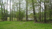Home for sale: Half Moon Lake Rd., Saltillo, TN 38370