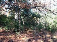 Home for sale: Raymond St. N., Springdale, AR 72764