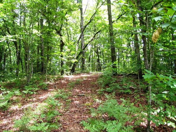 Lot 21 Toccoa Preserve, Blue Ridge, GA 30513 Photo 5