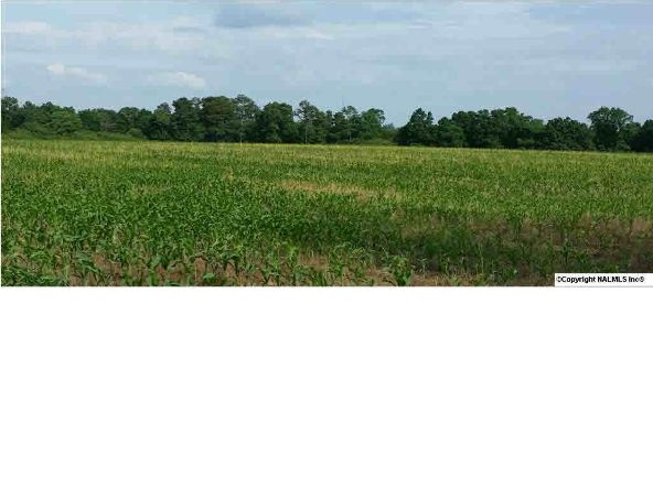6 County Rd. 395, Section, AL 35771 Photo 2