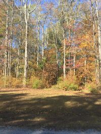 Home for sale: Lot #10 Ironwood Bluff Rd., Fulton, MS 38843