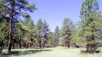 Home for sale: 2693 Lazy E. Rd., Williams, AZ 86046
