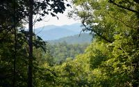 Home for sale: Up The Creek Trail, Hayesville, NC 28904