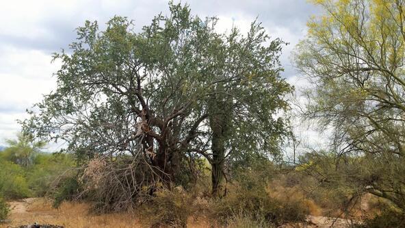16394 E. Dixileta Dr., Scottsdale, AZ 85262 Photo 14