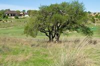 Home for sale: 3508 Comanche Trace Dr., Kerrville, TX 78028