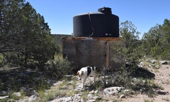 264 Sierra Verde Ranch, Seligman, AZ 86337 Photo 25