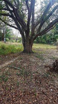 Home for sale: 4608 Pine St., Fruitland Park, FL 34731
