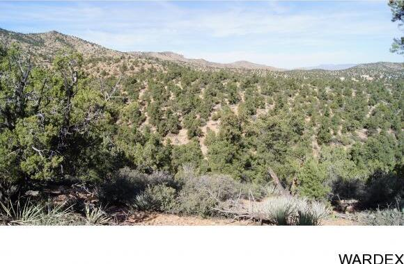 9999 N. Trap Springs Rd., Hackberry, AZ 86411 Photo 14
