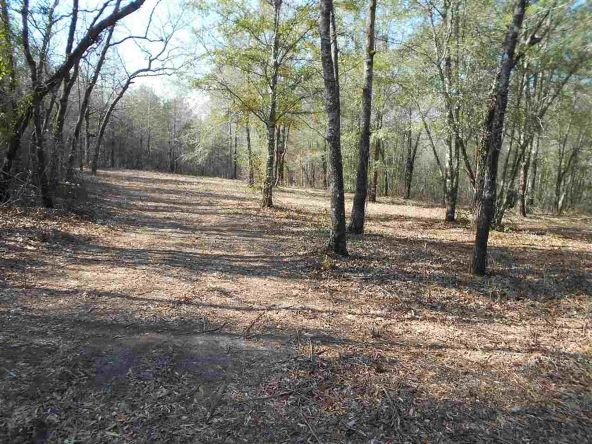 16.9 Acres Private Rd. 1363, Ariton, AL 36311 Photo 4