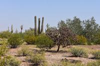 Home for sale: None Assigned - 0, Marana, AZ 85658