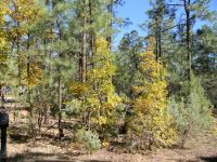 Home for sale: 6203 Pond Dr., Lakeside, AZ 85929