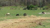 Home for sale: 1001 Crockett Ridge, Ewing, VA 24248