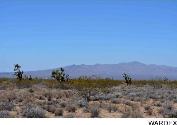 239 S. Tortoise Rd., Yucca, AZ 86438 Photo 6