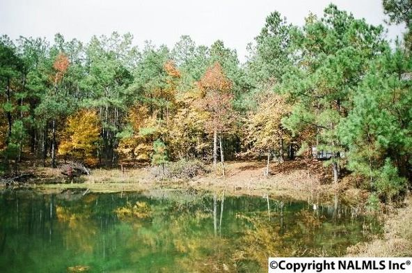 1041 County Rd. 277, Fort Payne, AL 35967 Photo 1