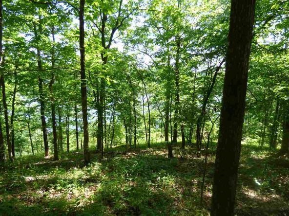 12 Ac Charlie Stover Rd., Royal, AR 71968 Photo 6