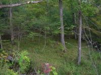 Home for sale: Tbd Smith Hollow Rd., Wytheville, VA 24382